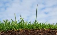 Тонкости профессионального ухода за газонами
